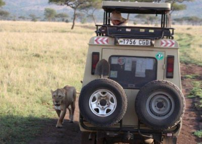 Lion Africa