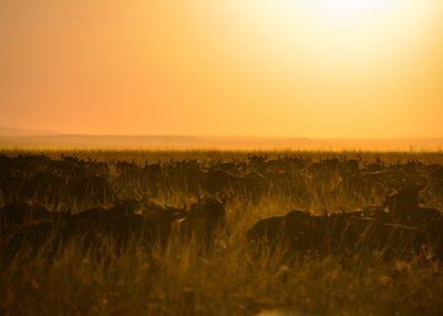 Plains Africa